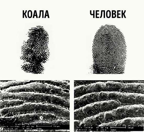 Интересные факты о криминалистике