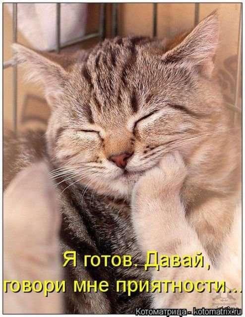 Свеженькие котоматрицы