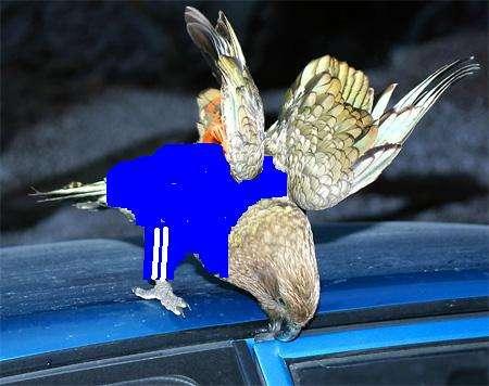 Попугаи-гопники