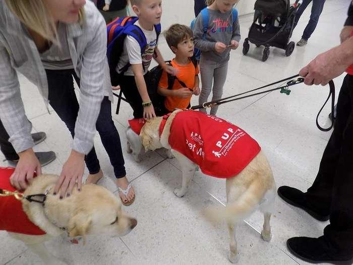 Собаки успокаивают пассажиров перед вылетом из Лос-Анджелеса