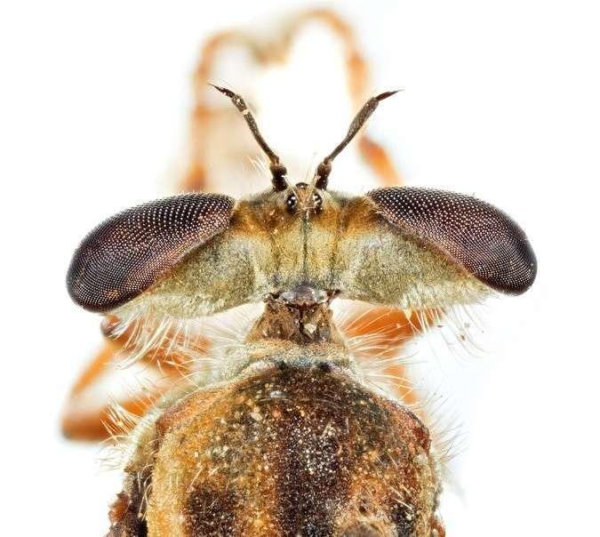 Триллионы мух: почему мухи так важны для нашей планеты?