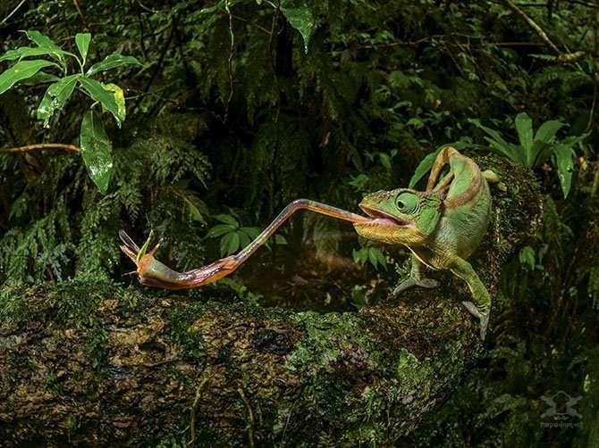 Фотографии от National Geographic