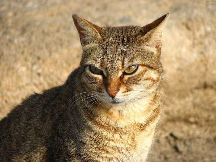 Что делать, если в доме завелся кот-стукач