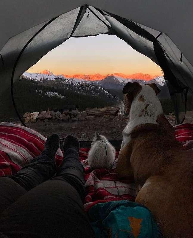 Кот и пес путешествуют вместе со своими хозяевами по Колорадо