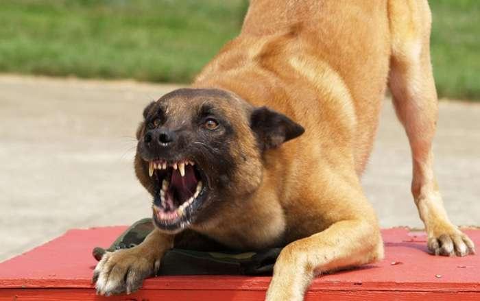 Наука подтвердила и объяснила, каким образом собаки распознают -плохих- людей