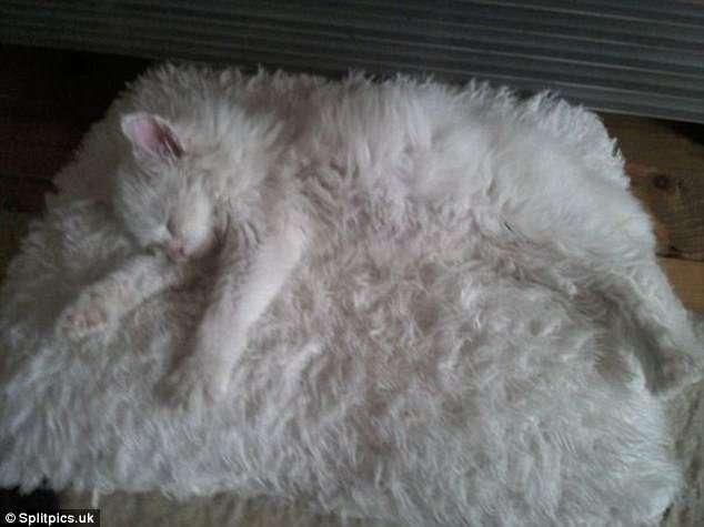 27 котов, которые действительно умеют маскироваться