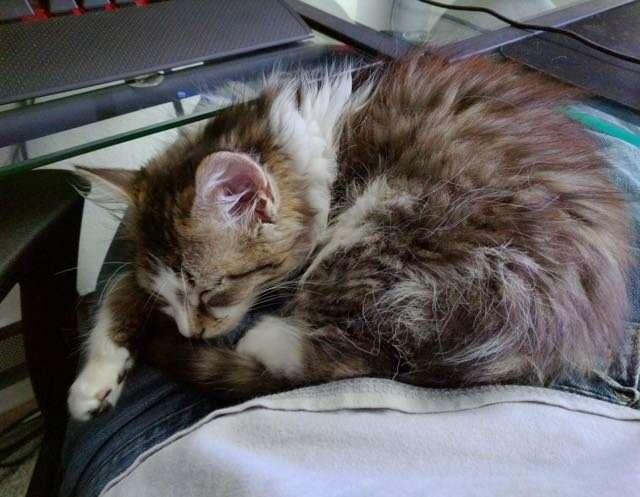 Ночью во время грозы бродячий котёнок пришел к одной паре за помощью