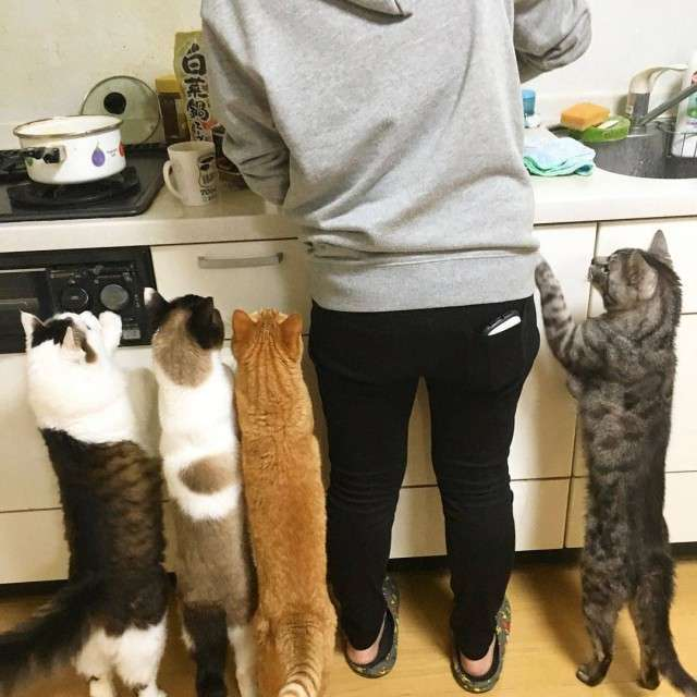 Прикольных котов пост