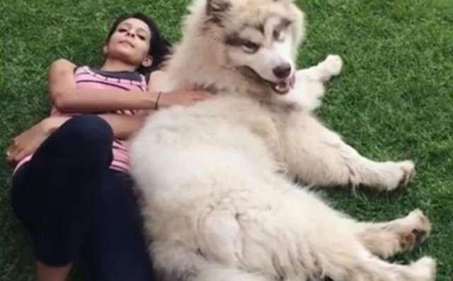 Девушка очень хотела пушистого щеночка и получила его