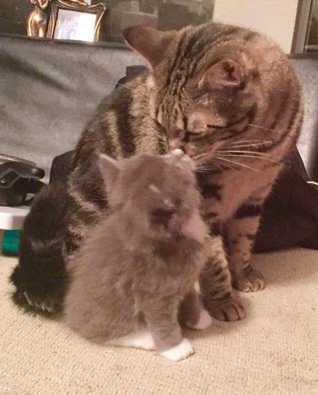 """""""Не бойся, я всё знаю!"""" Приютский кот принял бездомного котенка, как родного"""