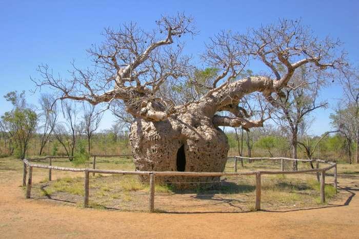 Деревья, чьи свойства выходят за рамки принятых норм