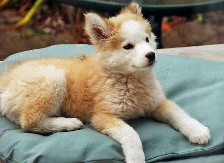 Он думал,что спас обычного щенка с улицы. Но когда она подросла...