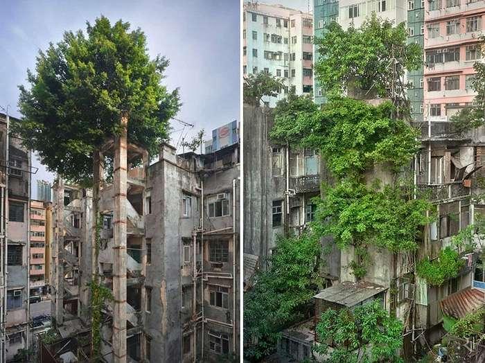 22 снимка, показывающие, как природа залечивает раны, нанесенные человечеством.