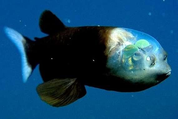 10 поразительных существ, обитающих в океане