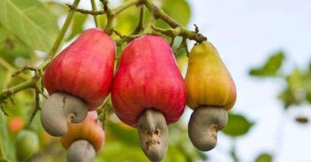 Как растут различные продукты