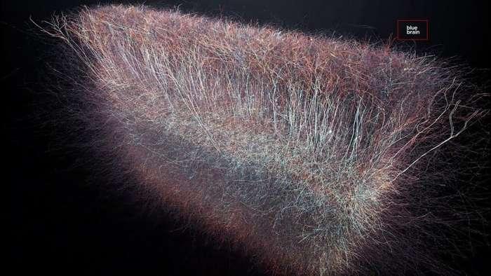 Учёные нашли многомерную Вселенную прямо в человеческом мозге!