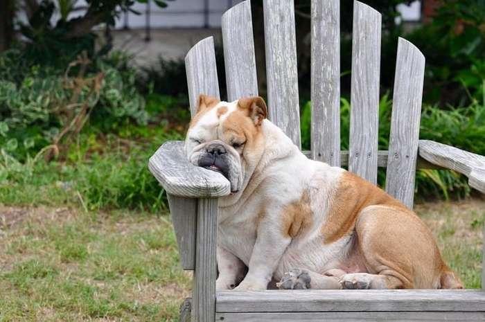 Как хочу, так и сплю: 20 собак, которые спят в самых забавных позах