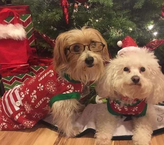 Праздник к нам приходит: очаровательные питомцы в рождественских нарядах