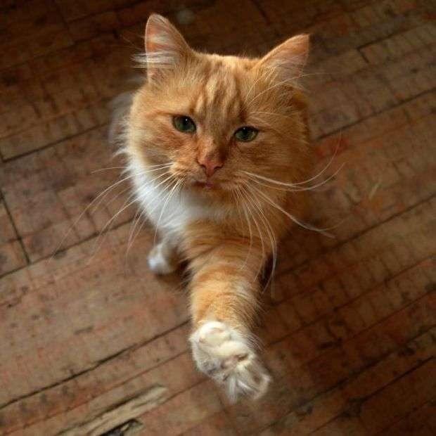 Как серпуховские студенты кота спасли