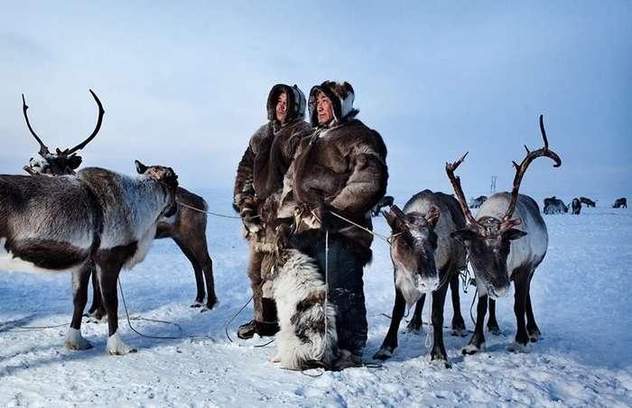 Смешная история о том, как в Тундре, зимой... ходят -по-маленькому-