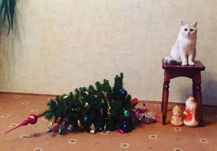Кот, елка и вполне ожидаемый итог
