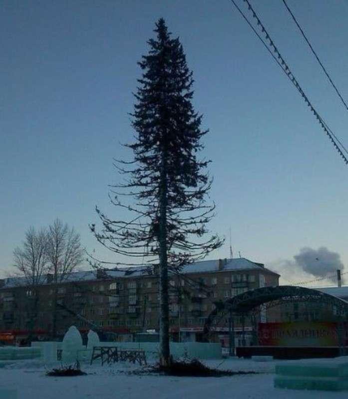 Приключения главной новогодней елки
