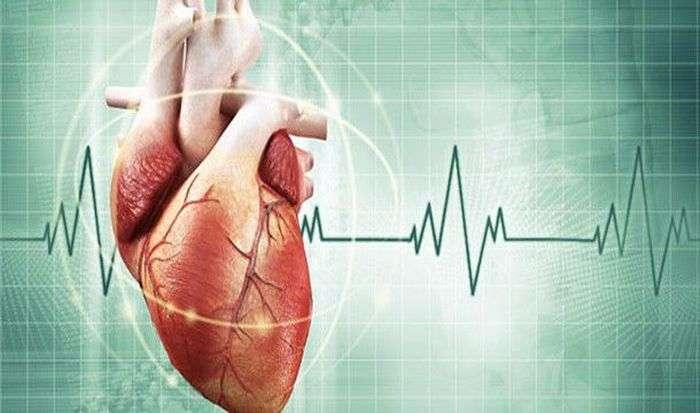 Семь неизвестных фактов о сердце