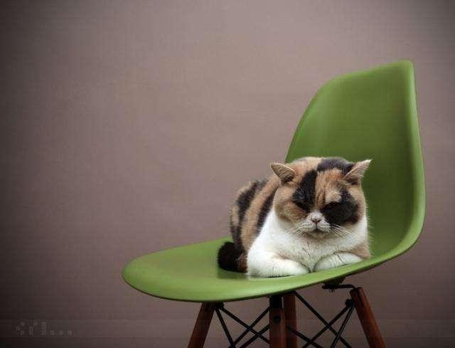 Довольные коты проекта -Cats love Eames!-