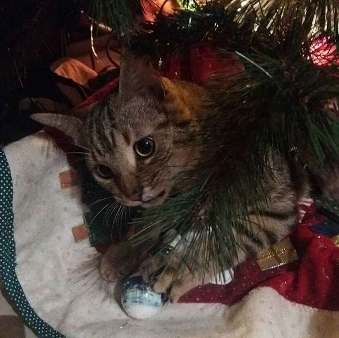 Новогодние коты