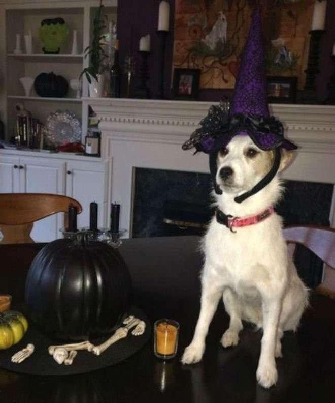 Собака прославилась в интернете спустя 4 года после своей смерти