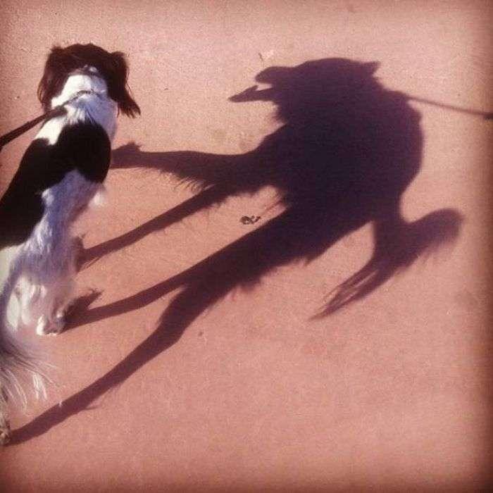 Причудливые тени
