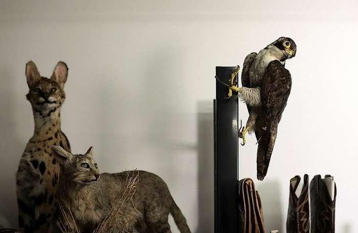 Голова бурого медведя, бивни слона, сапоги из змеиной кожи: коллекция предметов, изъятых в аэропорту Хитроу