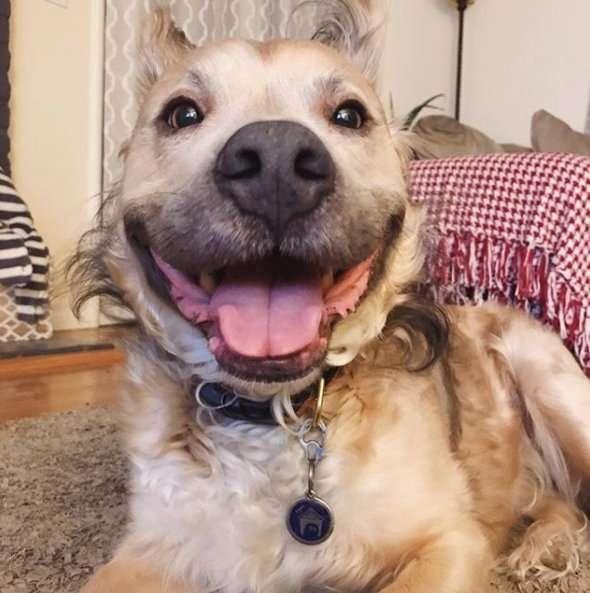 """У этого пса много странностей – поэтому его называют """"оборотнем""""! Но самая главная – ждёт вас внутри"""