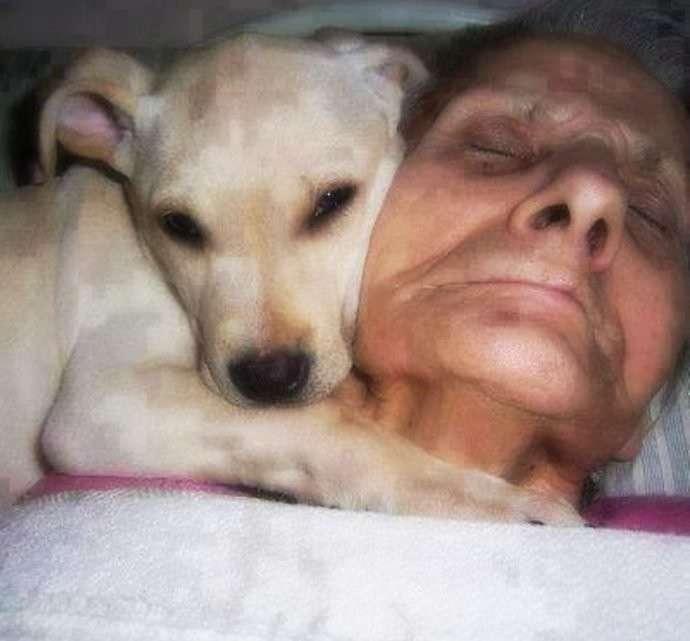 Она лежала в коме, а собака не отходила от нее ни на минуту