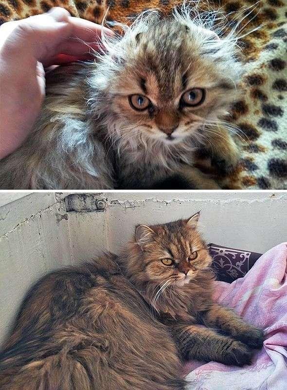 16 доказательств того, что коты растут ну очень быстро