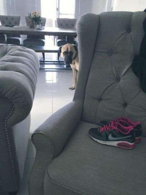 Смех до слез: прикольная собака, которая все время следит за хозяином