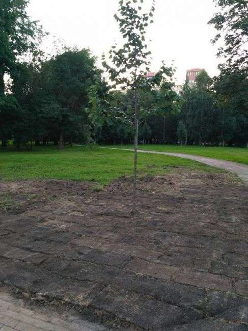 Коммунальные службы в Москве уложили рулонный газон травой вниз