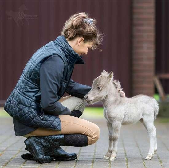 В Ленинградской области родился самый маленький конь в мире! Невозможно поверить своим глазам!