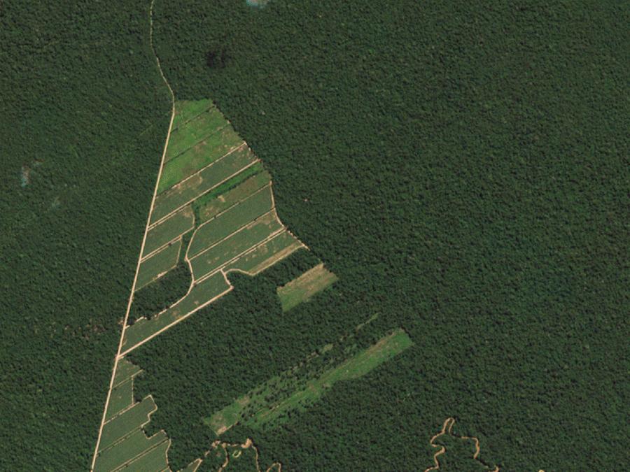 Частная компания создала -сканер всей Земли- или как из космоса наблюдать за соседом по даче