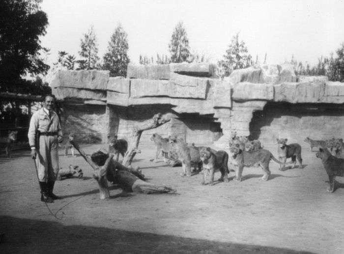 Львиная ферма в Калифорнии