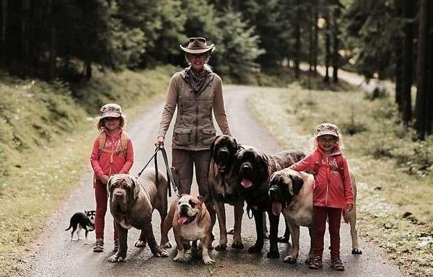 Хозяйка 18 собак делает своим бульдогам маникюр