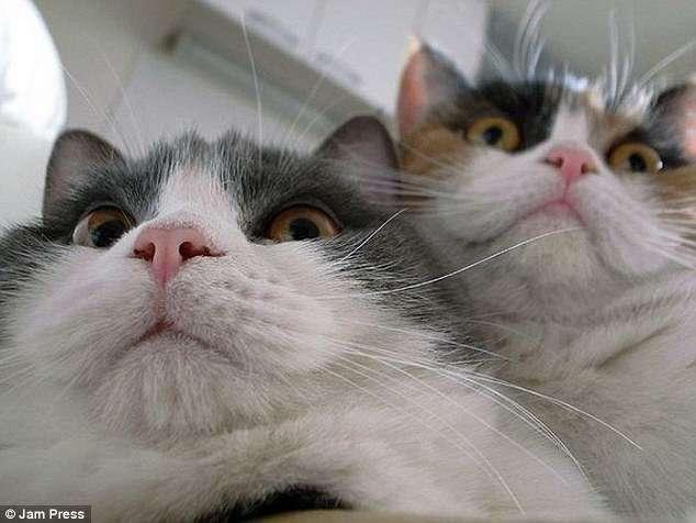 Котохакеры. Фото котов с вебкамер ноутбуков
