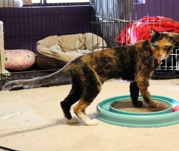 14-ЛЕТНЯЯ кошечка весила как 4-МЕСЯЧНЫЙ котенок, когда ее спасли