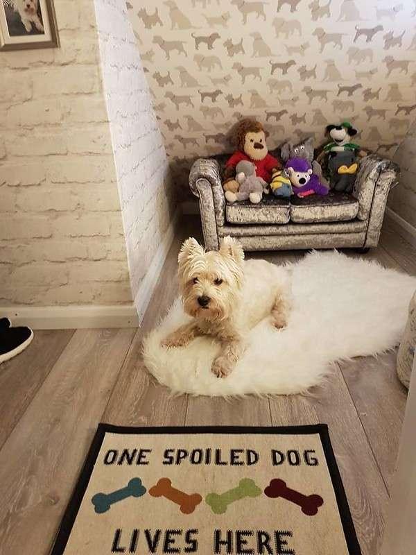 Элитная конура для любимого пса