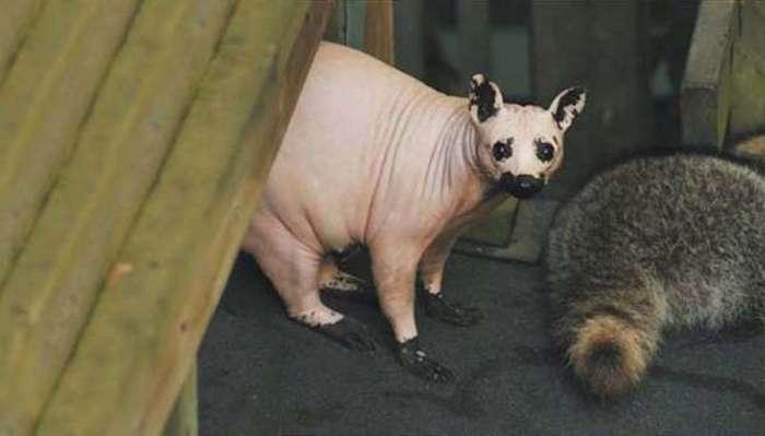 Животные, которые совсем не похожи на своих собратьев