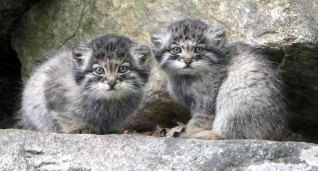 Фермер из Забайкалья нашел брошенных котят, а оказалось, что они стоят целое состояние