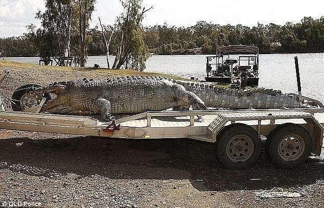 Убийцу 100-летнего крокодила оштрафовали на 10 000 долларов