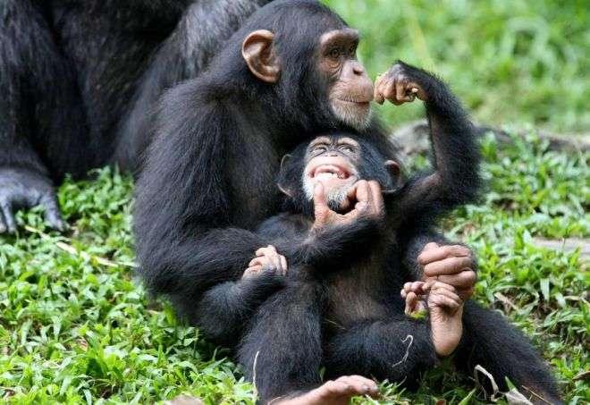 Самые разумные животные на Земле