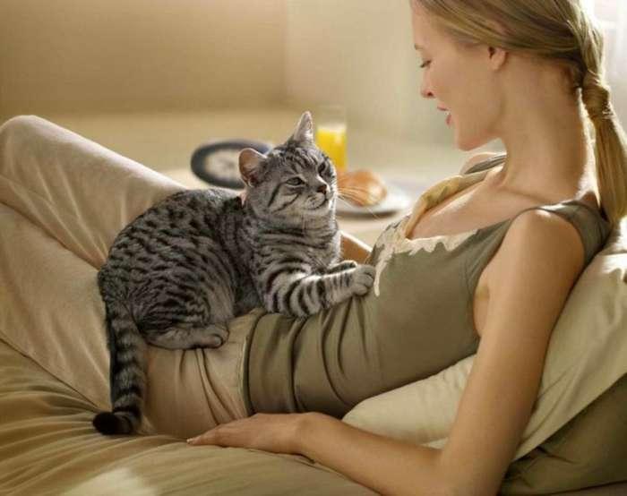 Кошачий -массаж-. Почему коты любят топтать лапками?