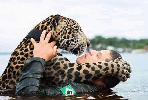 Солдаты спасли ягуара. Хищник вырос ручным, как домашний кот